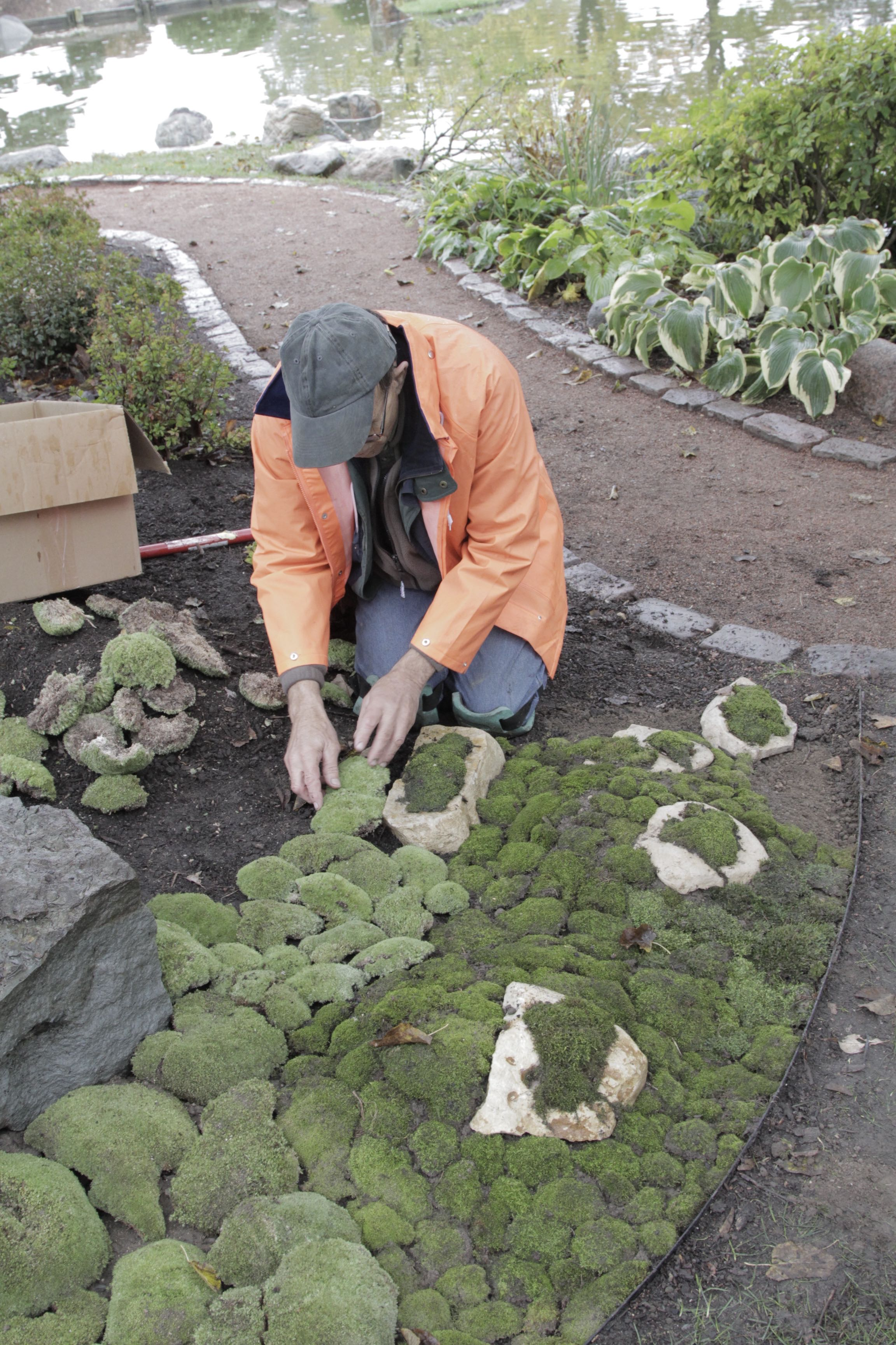 Finding A Place For Moss In The Japanese Gardens Of North America